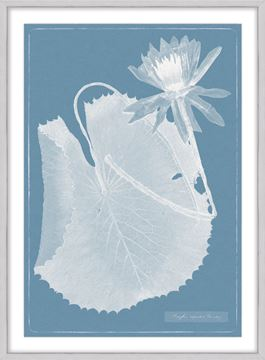 Picture of Cyanotype Water Lilies IX - Large