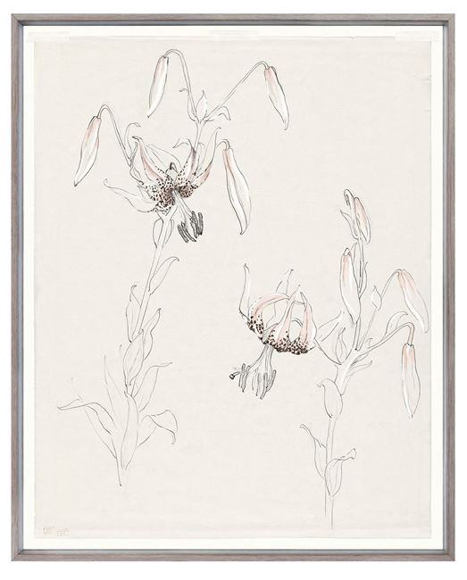 Picture of Drawing Study Lily, Early 20Th Century