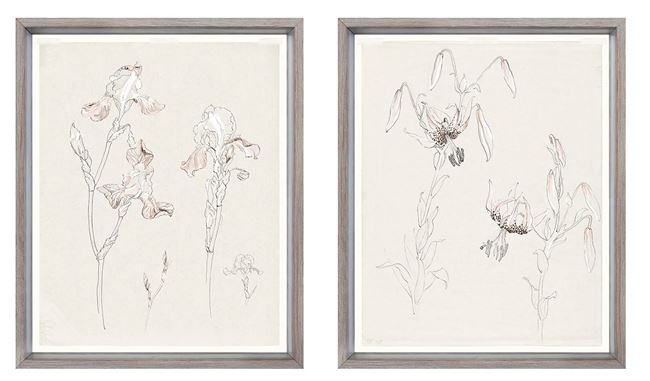 Picture of Drawing Study Bearded Iris And Lily, Early 20Th Century