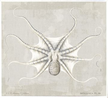 Picture of Mollusca Pl 46 - Large