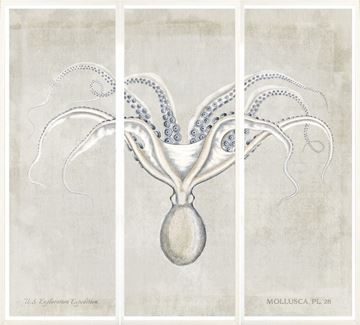 Picture of Mollusca Pl 28 Triptych