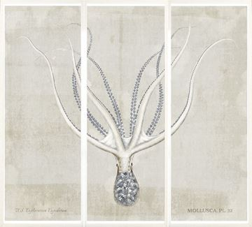 Picture of Mollusca Pl 32 Triptych