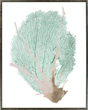 Picture of Spa Coral III - Large