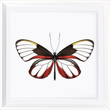 Picture of Vivid Papillons VI