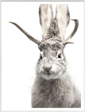 Picture of Jackalope - White