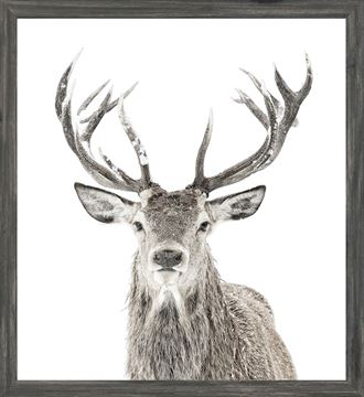 Picture of Mod. Farm - Stag - Mini - Grey