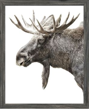 Picture of Mod. Farm - Algonquin Moose - Mini - Grey