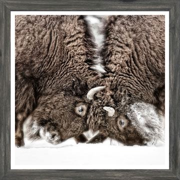 Picture of Mod. Farm - Sparring Lesson - Mini - Grey