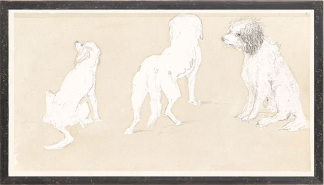 Picture of Collection 17 - Dog Study