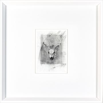Picture of Skull  - White