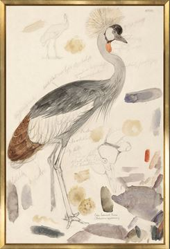 Picture of Lear - South African Crowned Crane