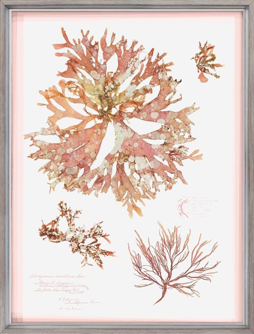 Picture of Coral Pressings I - Large