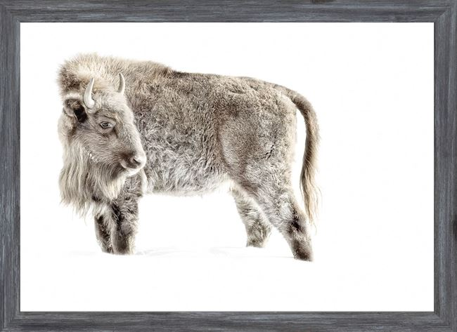 Picture of Mod. Farm - Juvenile Buffalo - Mini - Grey