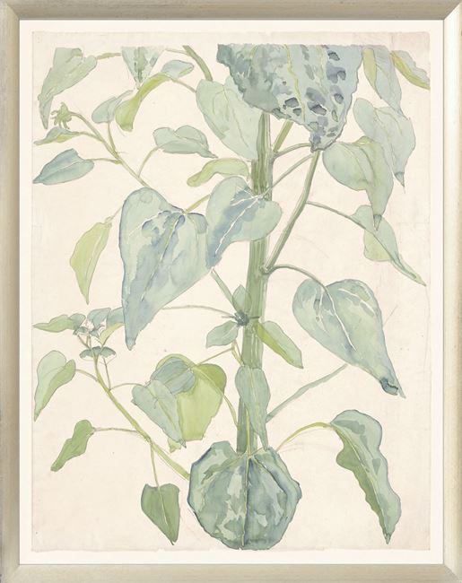 Picture of Collection 08 - Stalk & Leaves of a Sunflower, 1901