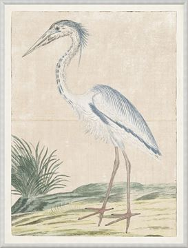 Picture of Gordon - Grey Heron, 1778