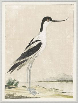 Picture of Gordon - Pied Avocet, 1778
