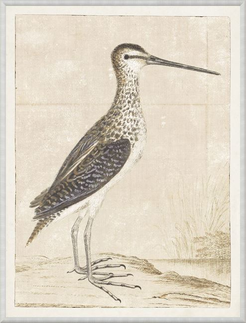 Picture of Gordon - African Snipe, 1778
