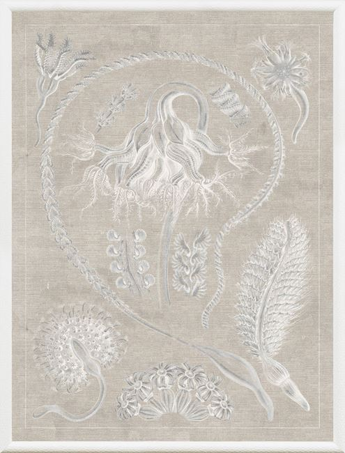 Picture of Marine Phyla VI - Large Grey