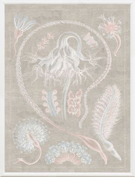 Picture of Marine Phyla VI - Large Pastel
