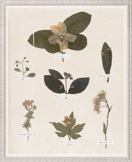 Picture of Emily's Pressings, C. 1841 IV - Large