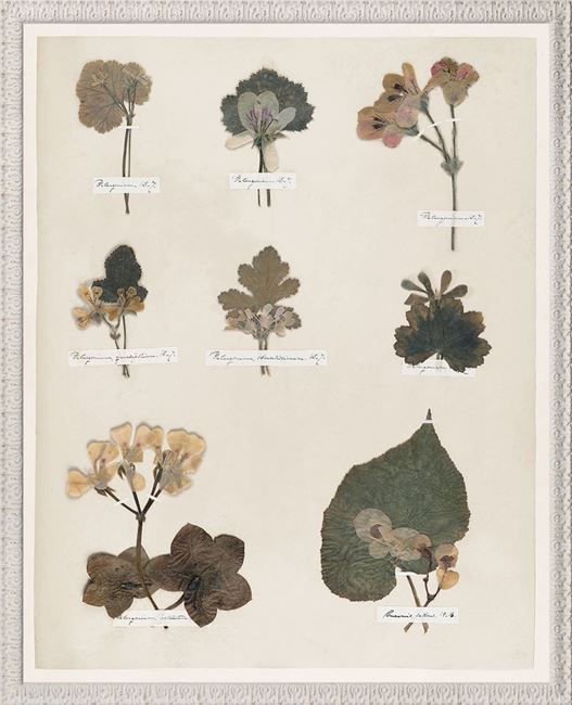 Picture of Emily's Pressings, C. 1841 V - Large