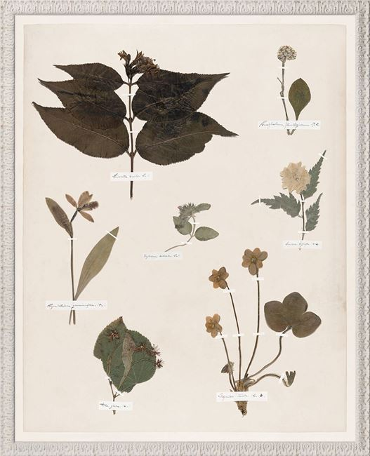 Picture of Emily's Pressings, C. 1841 XII - Large