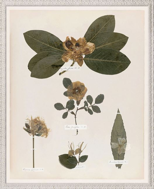 Picture of Emily's Pressings, C. 1841 VII - Small