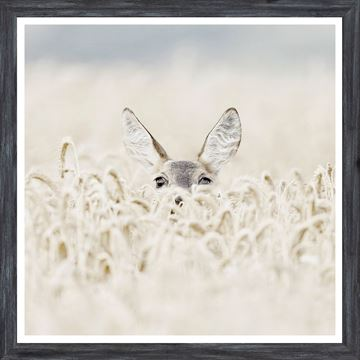 Picture of Mod. Farm - Peekaboo Deer - Mini - Grey