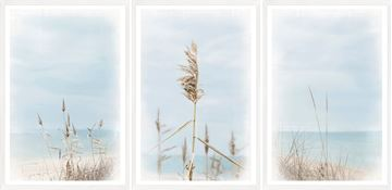 Picture of Dune Grass Triptych