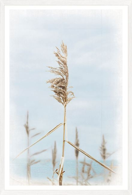 Picture of Dune Grass - Center