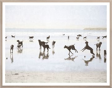 Picture of Dogs Day at the Beach - Medium
