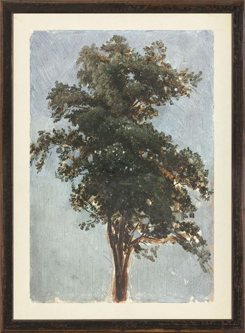 Picture of Collection Vintage - Tree Study, 1855 - Small